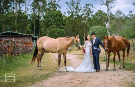 Photo 2 horses